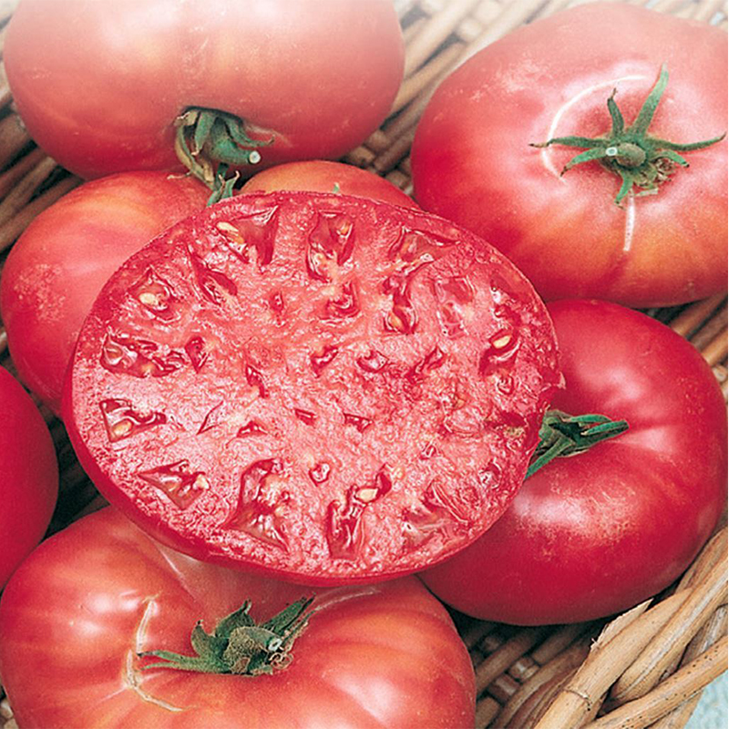 TOMATE MORTGAGE