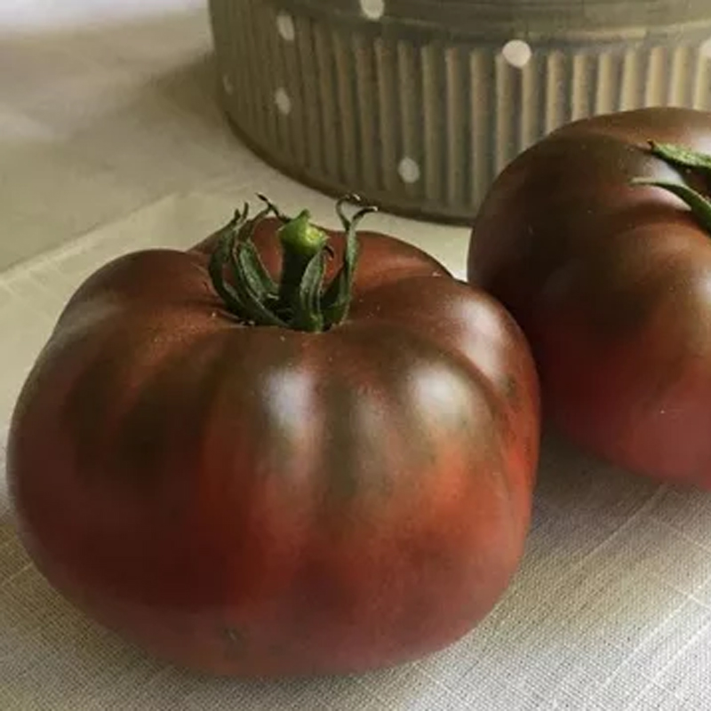 Tomate Cherokee Carbon