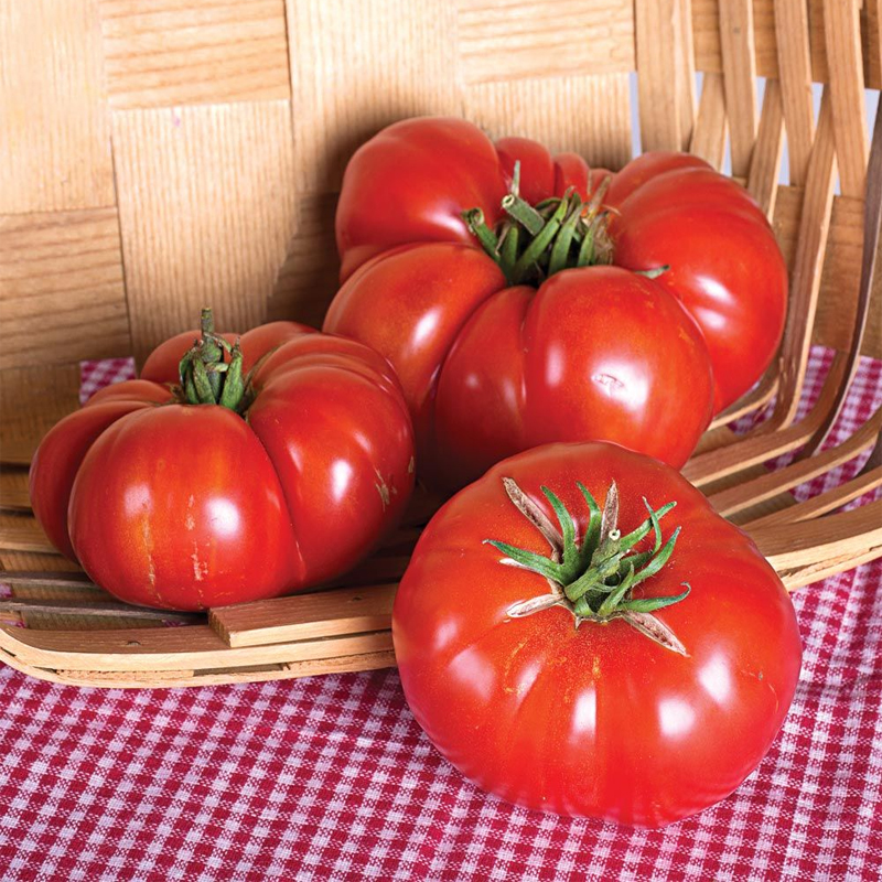 Tomate Marriage Gernuwine heirloom